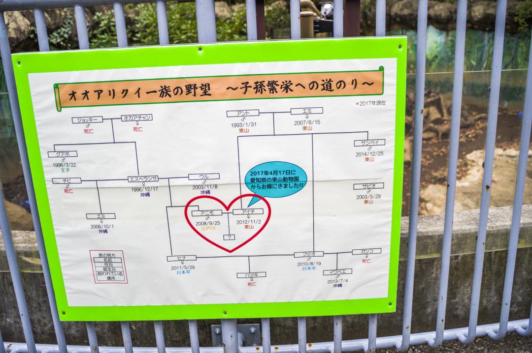オオアリクイの家系図