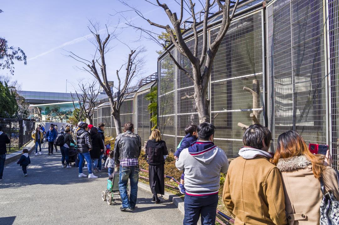 大阪動物園天王寺動物園の混雑具合