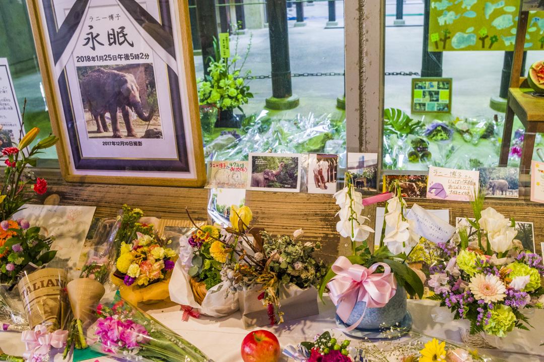 天王寺動物園のアジアゾウ献花台