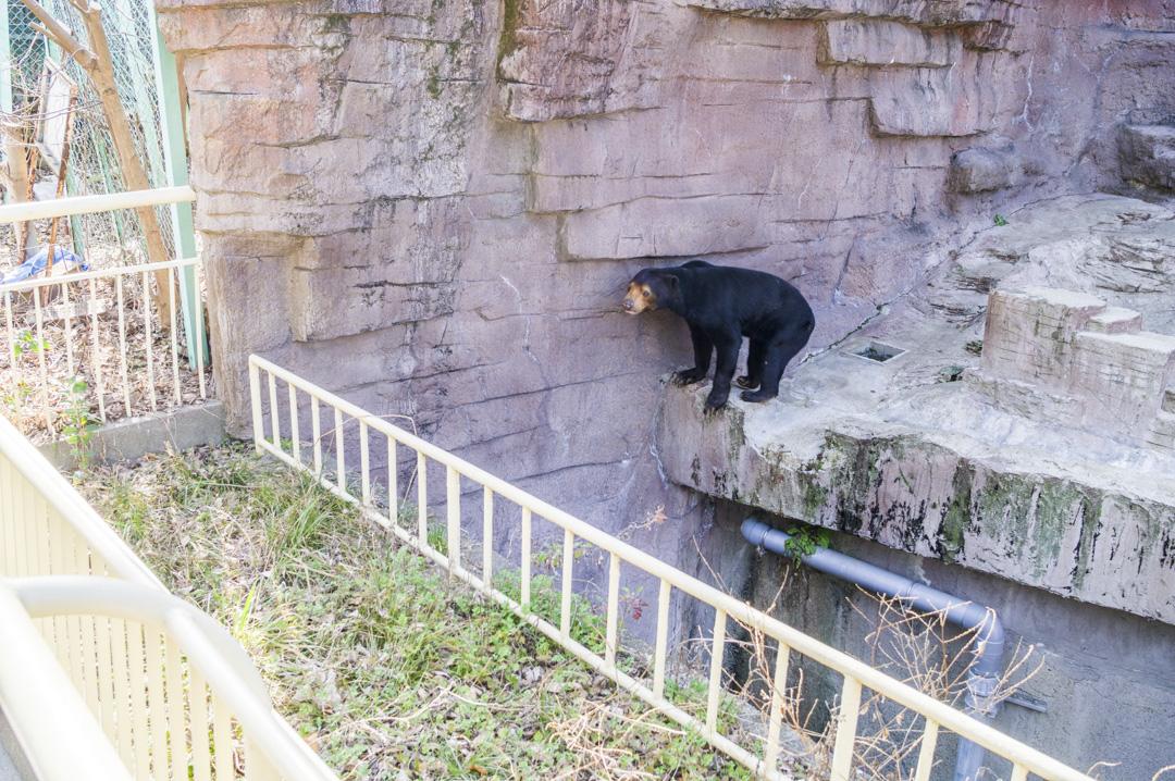 天王寺動物園の脱走できそうな堀