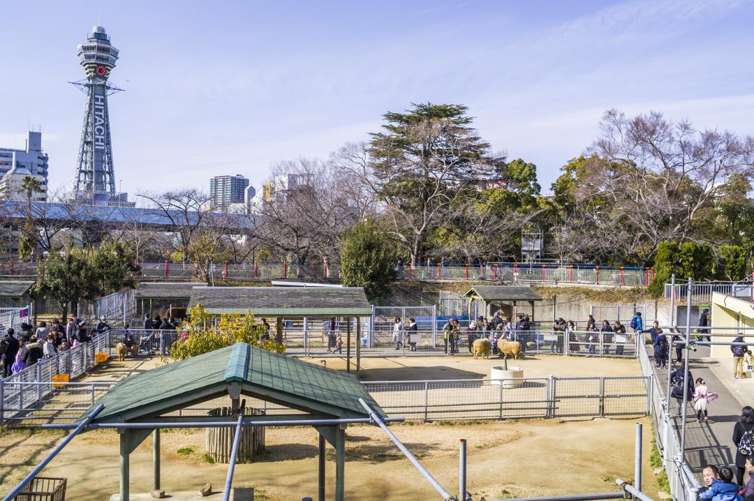 天王寺動物園ふれあいコーナーと通天閣