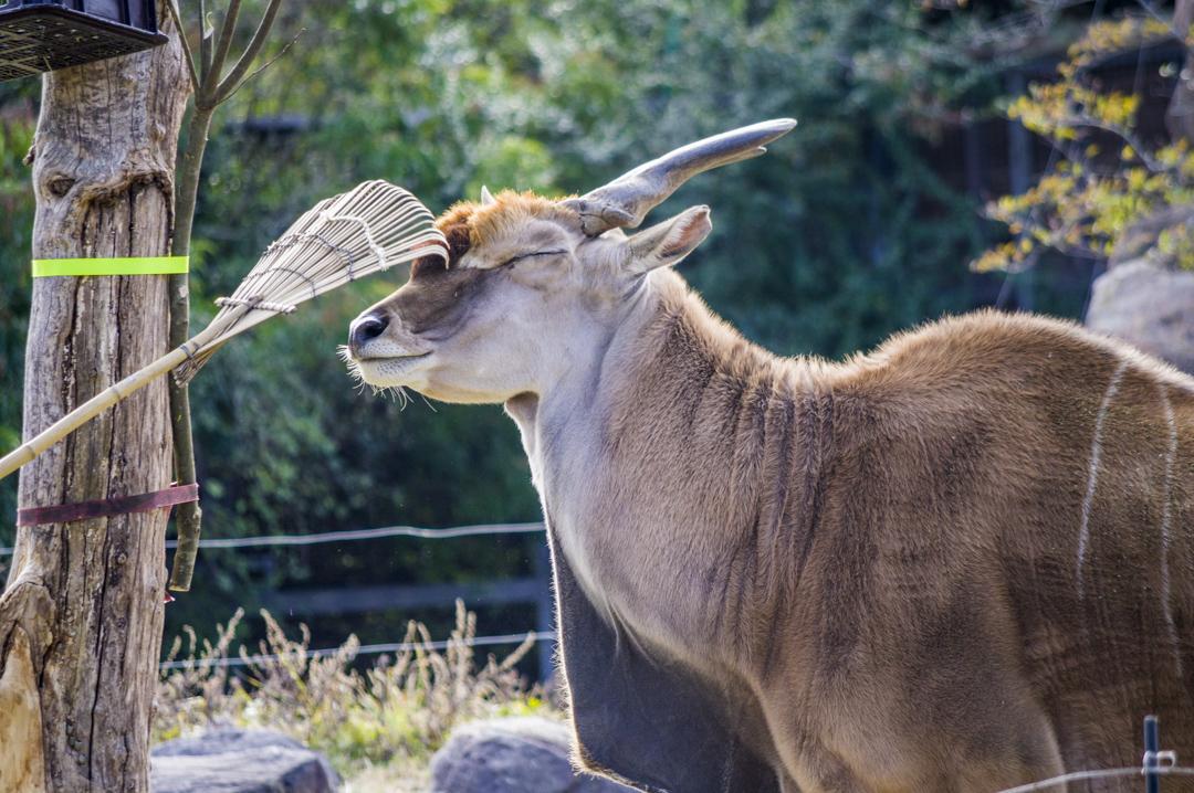 天王寺動物園のエランド
