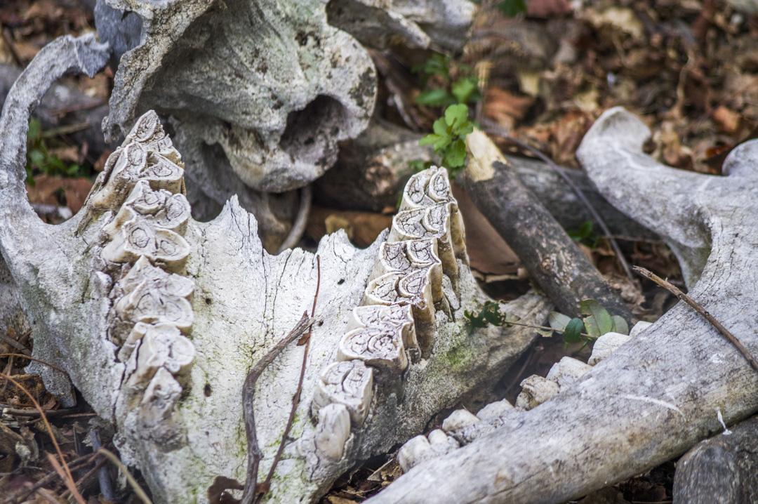 天王寺動物園の骸骨