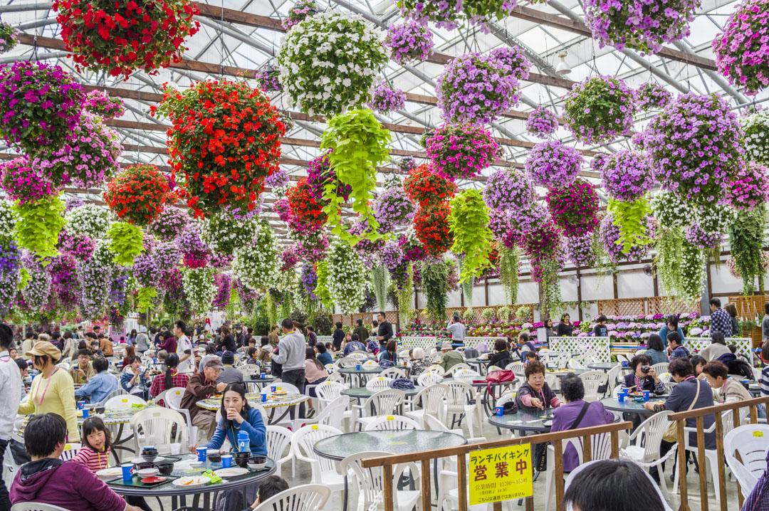 掛川花鳥園ビュッフェスタイルの食事