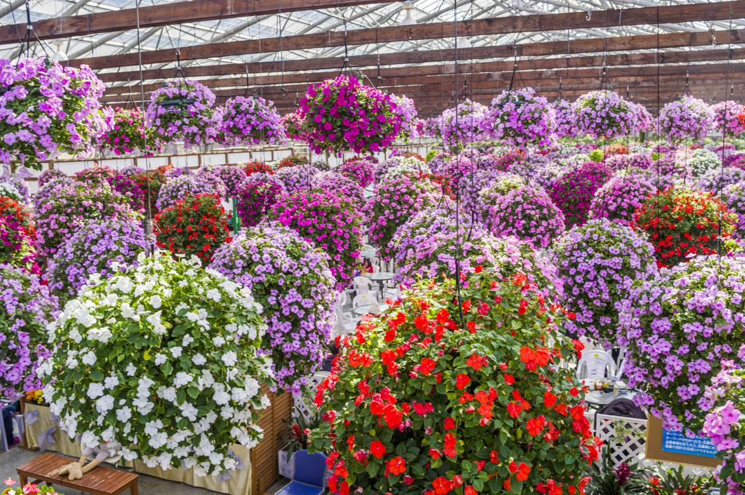 天空の花壇が満開