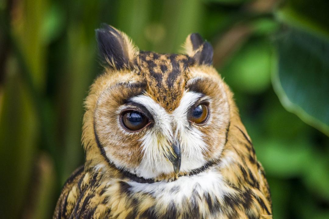 掛川花鳥園のかわいすぎるウサギフクロウ