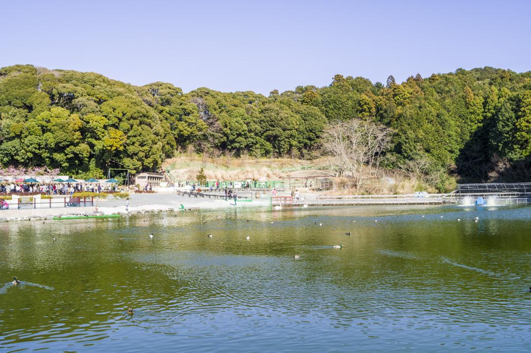 花鳥園の屋外エリアの池