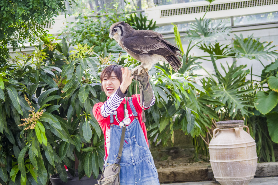 掛川花鳥園のフクロウショー