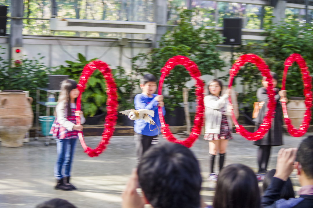 掛川花鳥園のバードショー火の輪くぐり