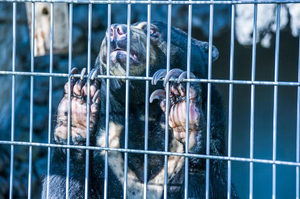 甲府市遊亀公園付属動物園のマレーグマサクラ