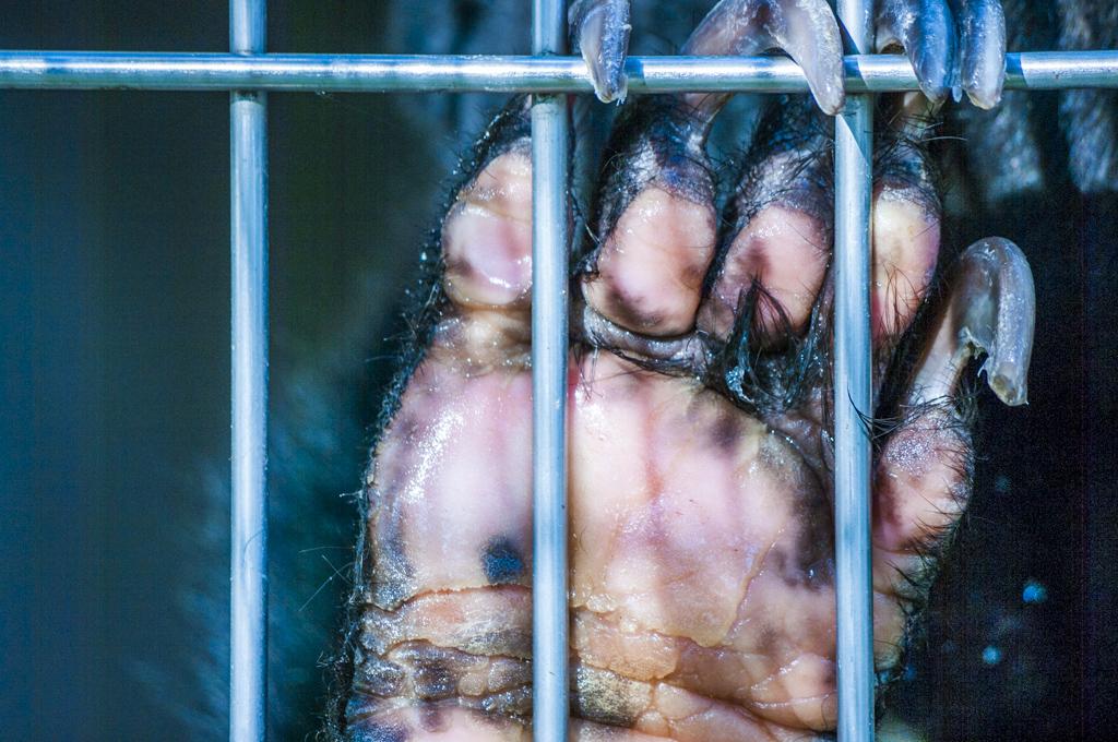 甲府市遊亀公園付属動物園のマレーグマサクラの手