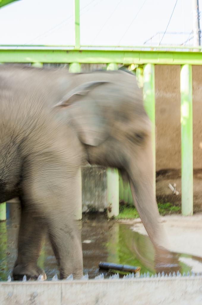 甲府市遊亀公園付属動物園のアジアゾウてるのダンス