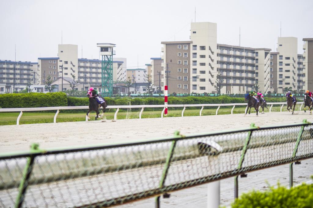 駿蹄賞のゴール前直線で7馬身引き離すサムライドライブ