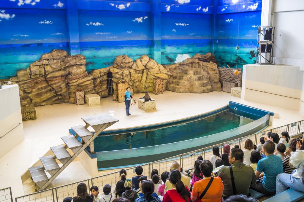 鳥羽水族館のアシカショー