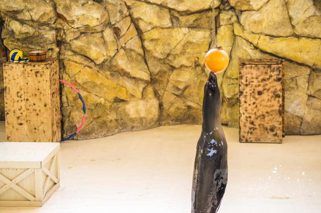 鳥羽水族館のアシカショーのジャンプ