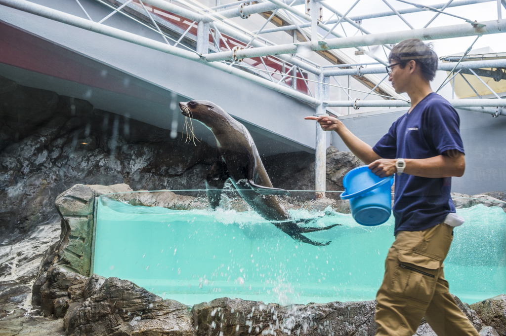 鳥羽水族館のアシカの調教シーン