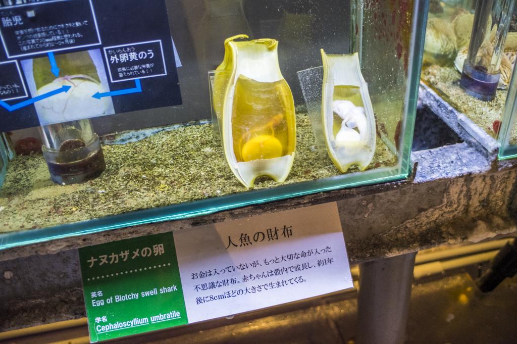 鳥羽水族館のナヌカザメの卵人魚の財布