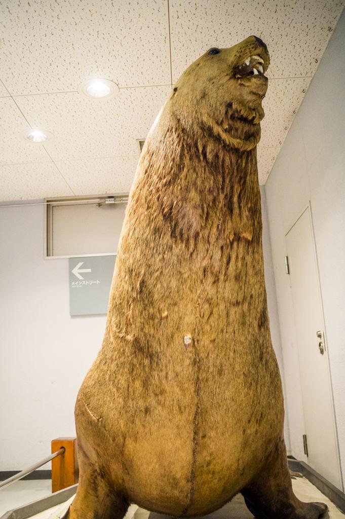 鳥羽水族館のトドの剥製