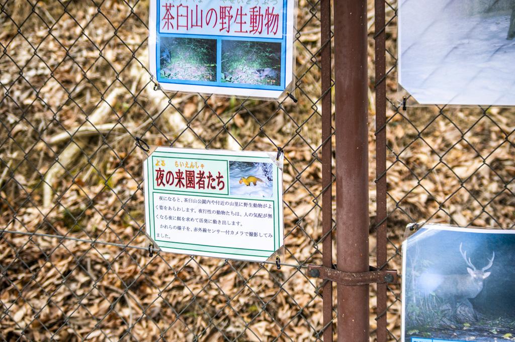 野生動物を夜の来園者たちとして紹介している看板