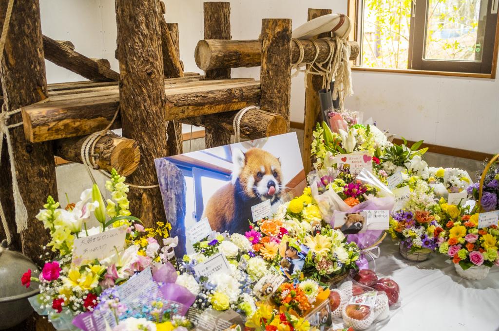 建物内にあった亡くなったレッサーパンダへの献花台