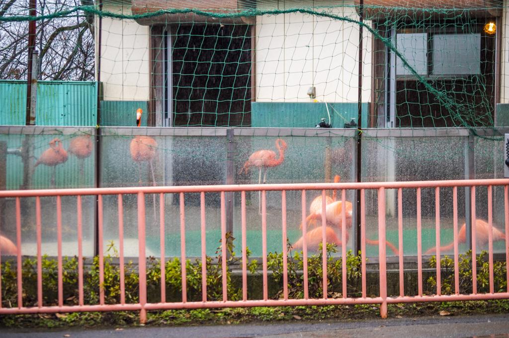 ピンクの柵越しに見えたピンクのフラミンゴ