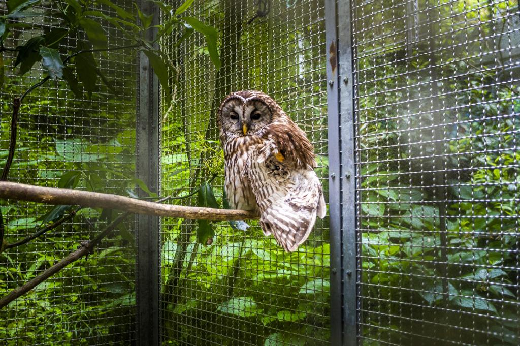 鳳来寺山自然科学博物館のフクロウ