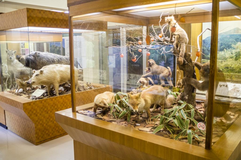 鳳来寺自然科学博物館の剥製