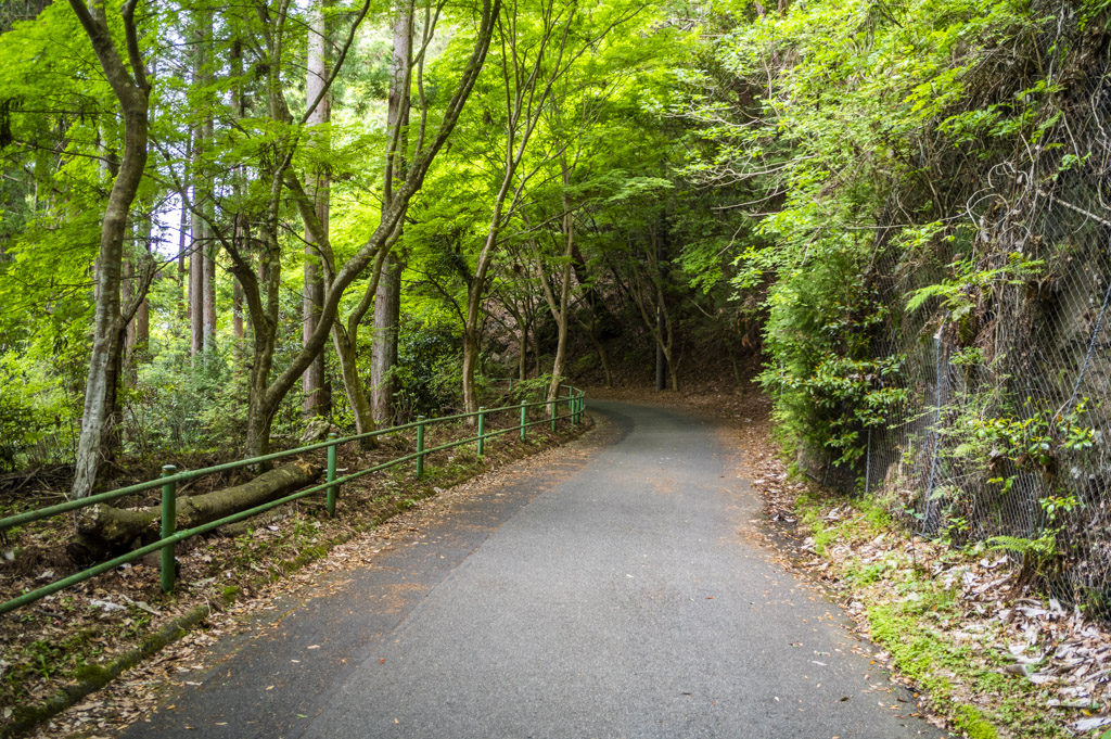 鳳来寺山の道