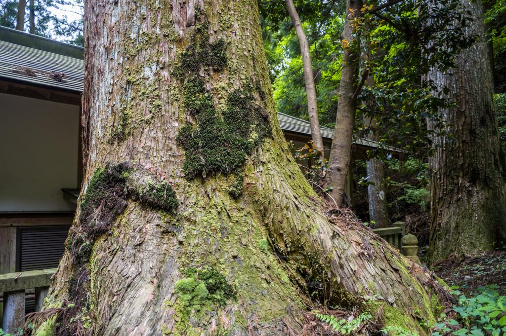 鳳来山東照宮の木