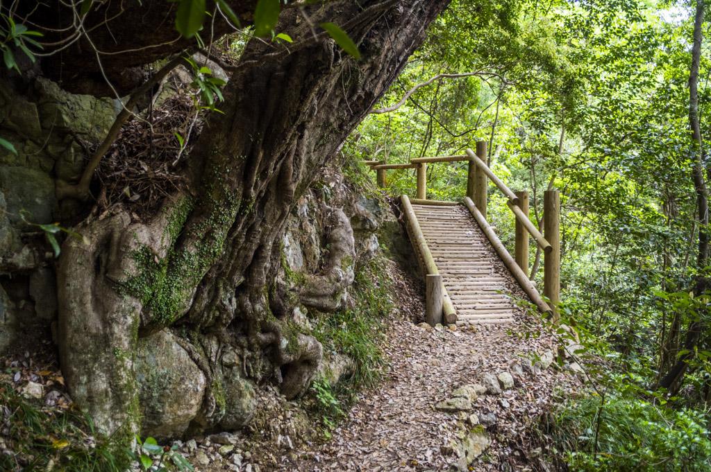 鳳来寺山の自然歩道の階段