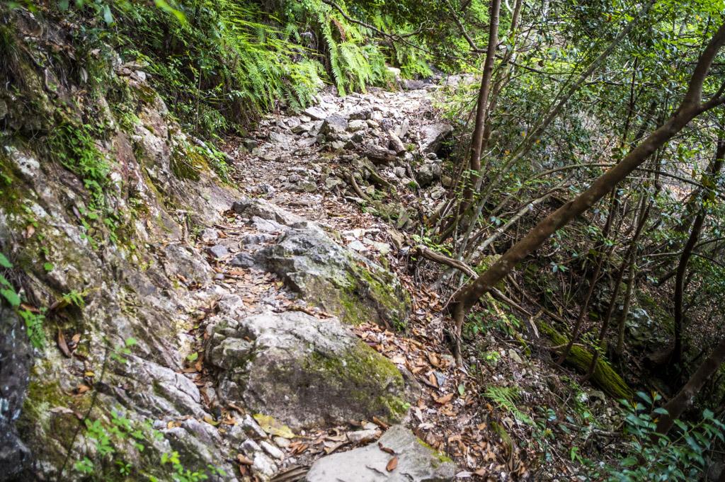 鳳来寺山の自然歩道
