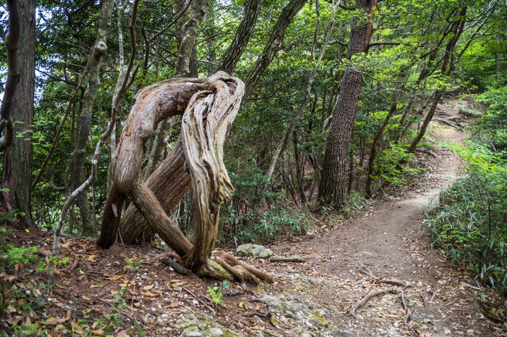 鳳来寺山の森の精