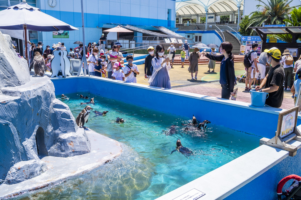 ミニプールで泳ぐペンギンたちとエサやりに並ぶお客さんの行列