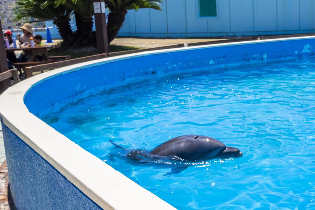 プール内で気持ちよさそうに泳ぐイルカ