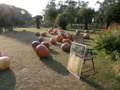 おばけカボチャ(夢の島熱帯植物館)