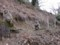 嵐山モンキーパークいわたやまのサル