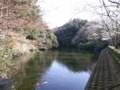 散在ガ池(鎌倉湖)・桜その1