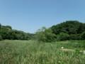 鎌倉広町緑地(園内の風景)
