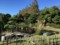 神奈川県立フラワーセンター大船植物園(和風庭園)