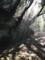 20180304諫早公園の木漏れ日その1