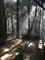 20180304諫早公園の木漏れ日その2