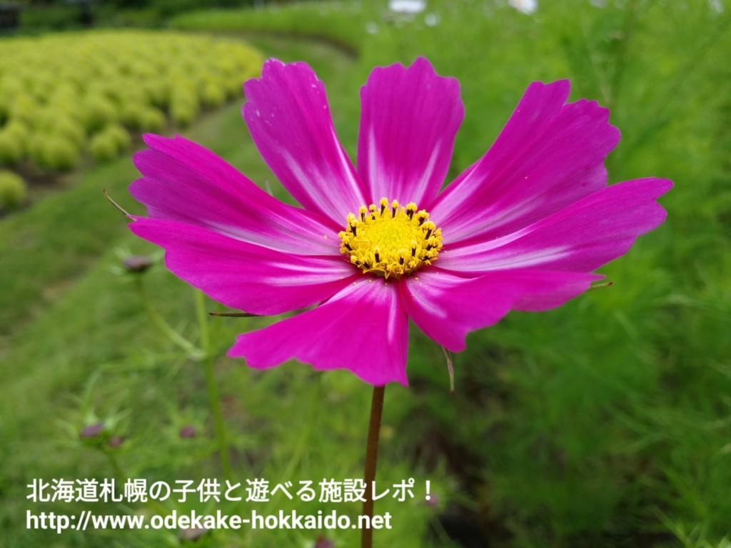 f:id:amazonkakaku:20170925225919j:plain