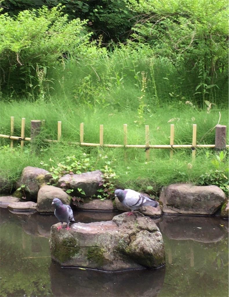f:id:ambertakahashi04080715:20170727131234j:image