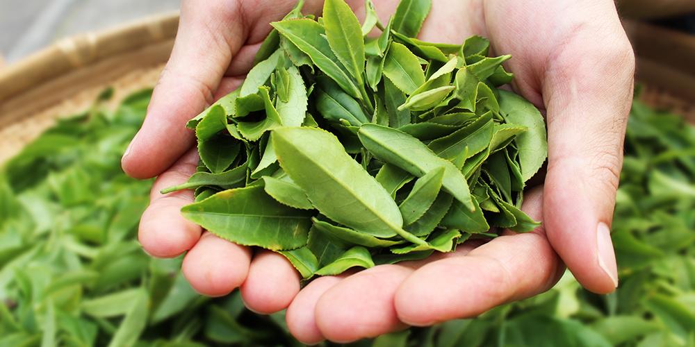 100%宮崎県産の茶葉