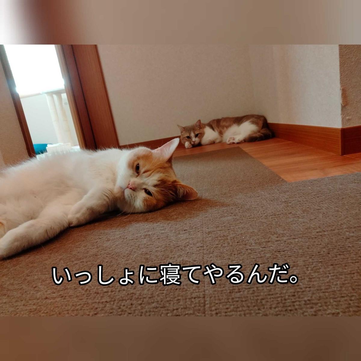 f:id:ameda-amanatsu:20210710140040j:plain