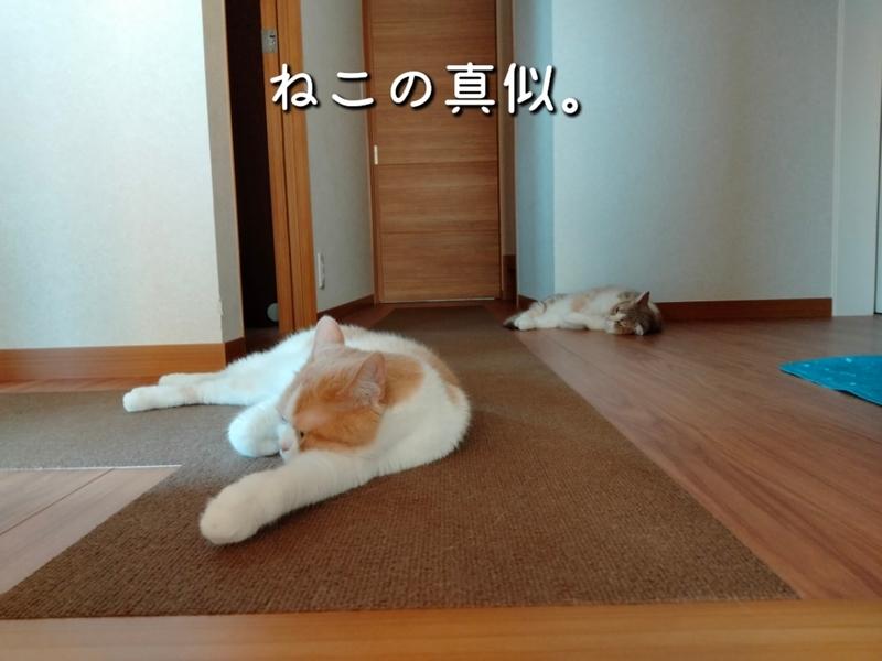 f:id:ameda-amanatsu:20210722081458p:plain