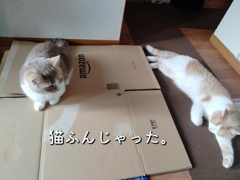 f:id:ameda-amanatsu:20210722101137p:plain