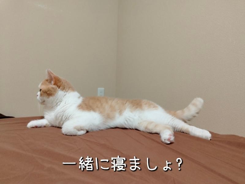 f:id:ameda-amanatsu:20210907081637p:plain