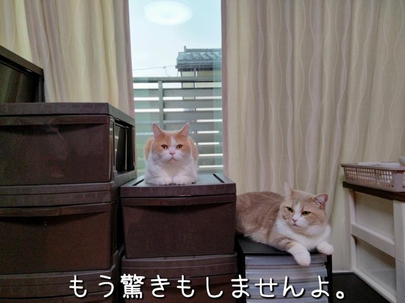 f:id:ameda-amanatsu:20210907081903p:plain