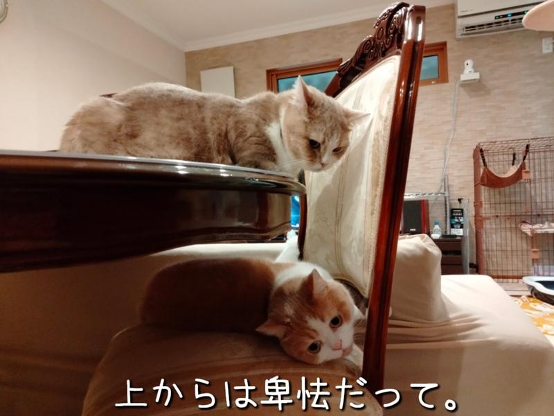 f:id:ameda-amanatsu:20210908085615p:plain